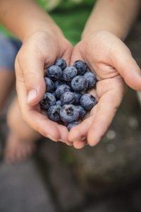 Child holding fresh blueberries