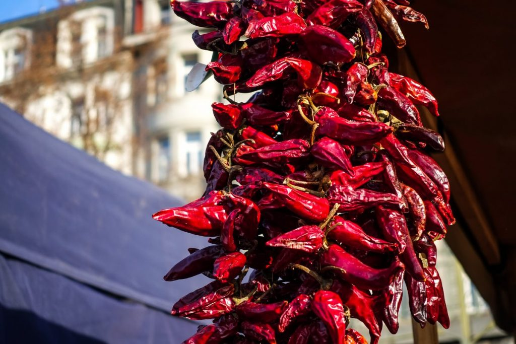 Hanging dried chili peppers