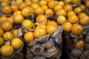 Physalis fruit close up
