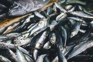 Sardines close up