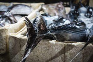 Tuna fish tail