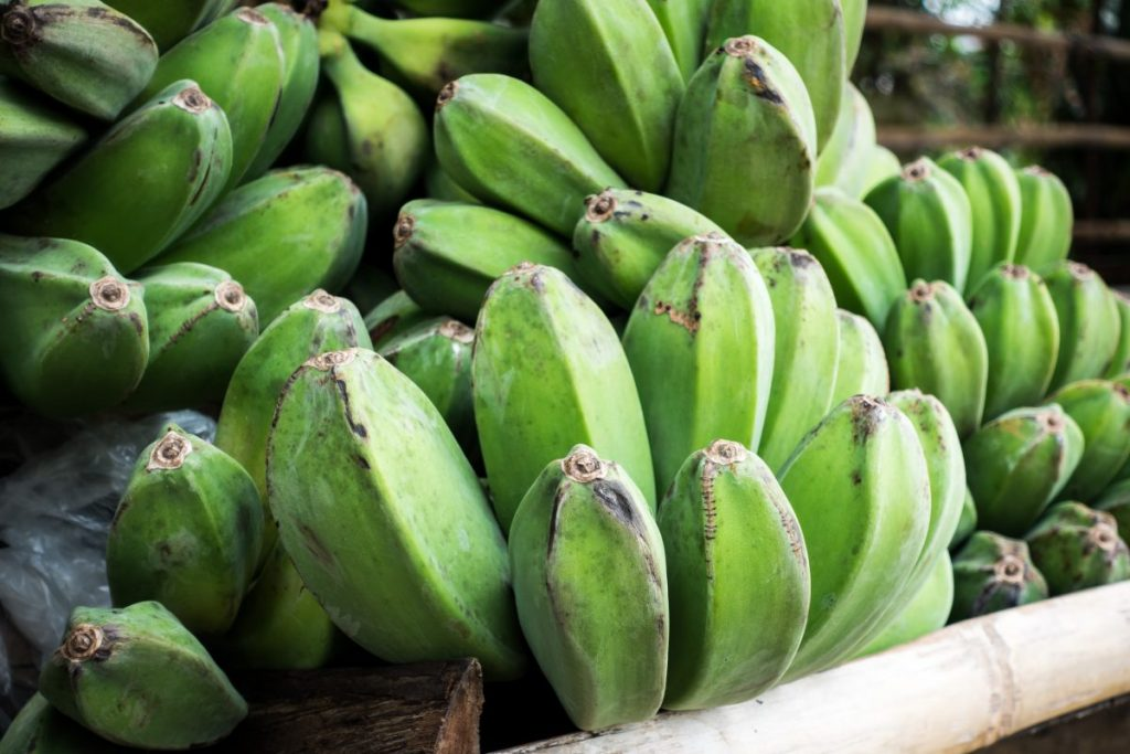 Green bananas for cooking
