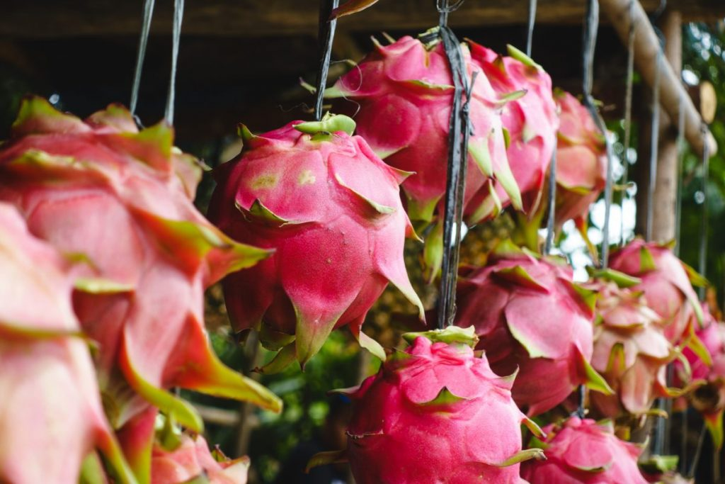 Pitaya dragon fruit at a market in Philippines