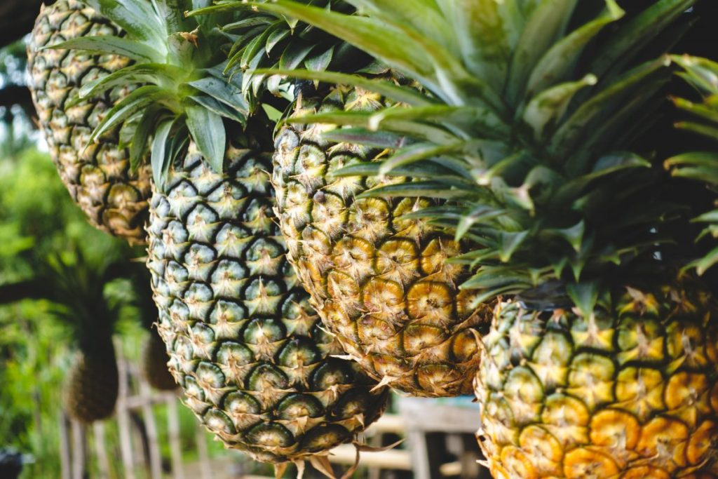Tropical pineapples at a market