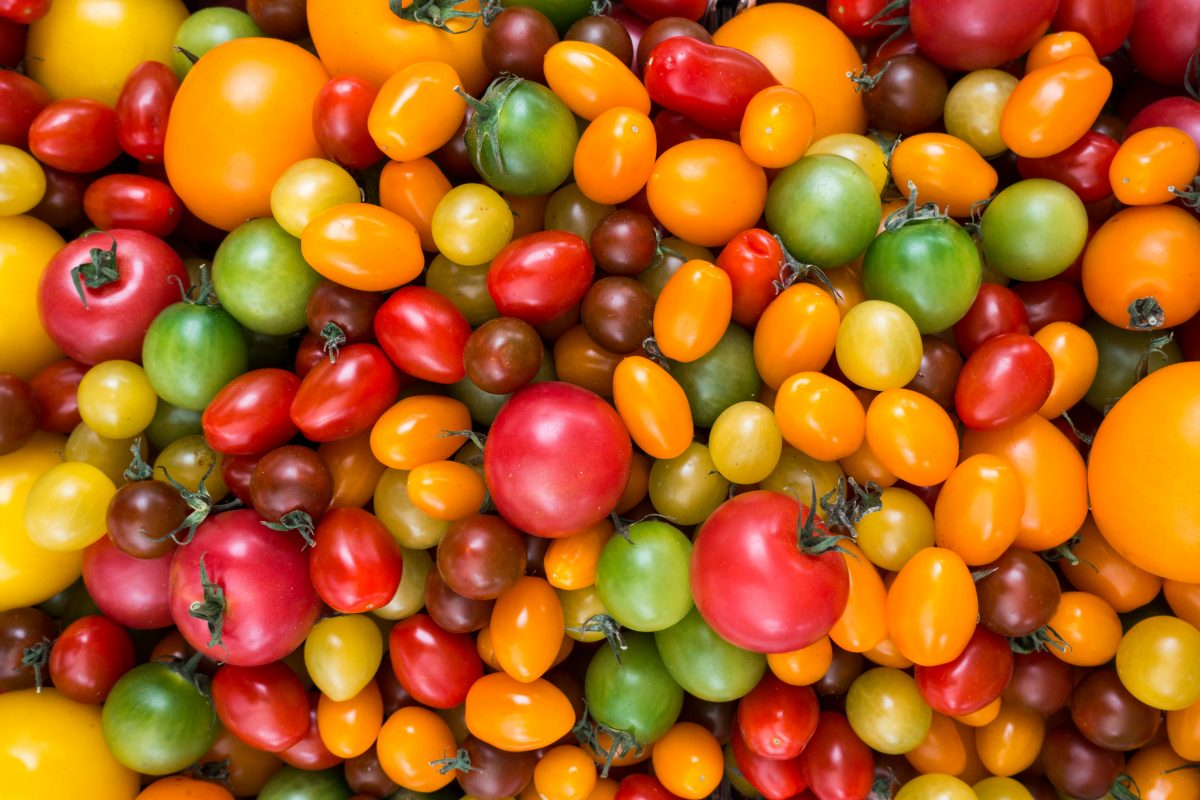 Colorful variety of tomatoes