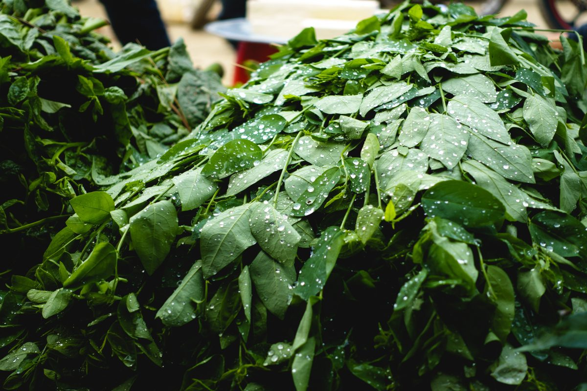 Wet herbs at a market