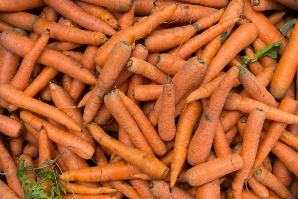 Freshly harvested carrots at a market