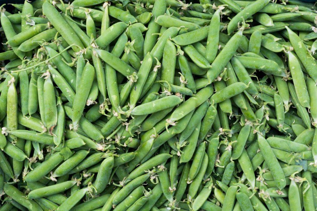 Full frame of sweet green peas