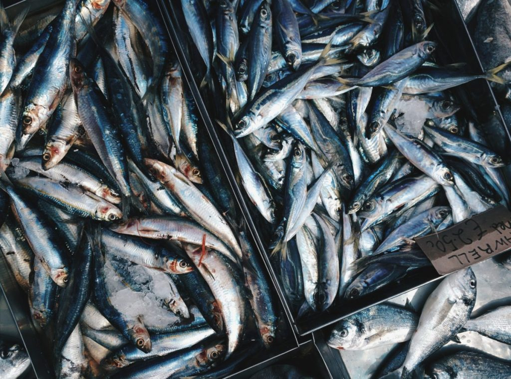 Freshly caught mackerels on ice for sale