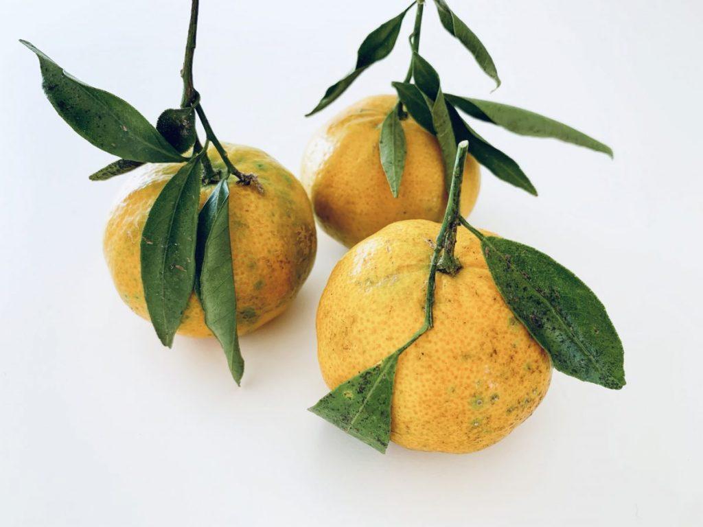 Fresh mandarins